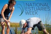 National Estuaries Week / Estuaries Day /#iheartestuaries / Estuaries