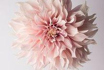 """Flores / Henry Beecher disse: """"as flores são as mais doces coisas que Deus já fez, e se esqueceu de colocar alma dentro"""". Na realidade Deus é um artista e as flores são, talvez, uma das suas melhores criações. As flores têm uma vida muito curta, mas sem dúvida muito significativa. Durante gerações, as flores têm ajudado a expressar emoções humanas e sentimentos. A sua beleza, perfume e cores brilhantes são suficientes para fazer uma pessoa sorrir. Saiba mais em: www.asenhoradomonte.com"""
