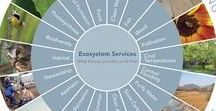 Ecosystem Services / Economic Value / Ecosystem Services / Economic Value
