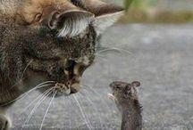 Amigos improváveis / A amizade entre animais por vezes vai contra todas as leis da natureza. No entanto, alguns animais surpreendem qualquer um ao demonstrar uma fidelidade e companheirismo a diferentes espécies, raças e, inclusive, tamanhos. Saiba mais em: www.asenhoradomonte.com #asenhoradomonte