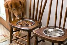 Lucky Pet - Chow Time / Cool food bowls for pets