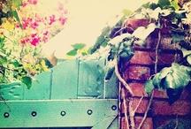 Garden / by Maria Kashem