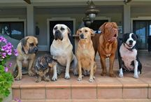 My Critters : My dogs & cats / Pictures of my own animal household. It's a madhouse!