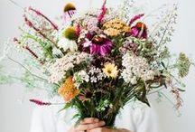 Flowers / by Rachel O'Brien