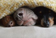 Cute Experience : the cutest pictures around. #animals / Cute pictures of animals.