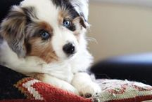 puppies are adorable / only puppies