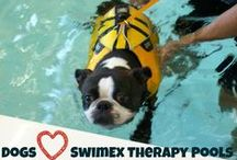 Therapy Pools for Pets / There are many great benefits of hydrotherapy for animals. Veterinarians use aquatics to help with arthritis, obesity, pre- and post surgical rehabilitation, dysplasia, balance, coordination, fitness, muscle tone, and much more. Water's buoyancy creates a safe environment that lessons stress on joints and minimizes pain while it encourages movement and builds fitness.   / by SwimEx
