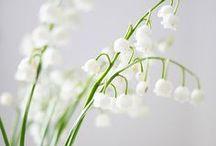 In season: Spring