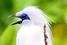 Aviary / The Aviary at Waddesdon is a magical place, home to an exotic collection of birds, many that are endangered in the wild. We support the conservation of these birds and are involved in captive breeding programmes.