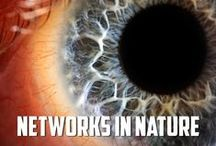 Networks in Nature / Life Imitates Art and Art Imitates Nature... When We Build Networks We Imitate Nature...