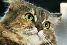 Cats / Γάτες