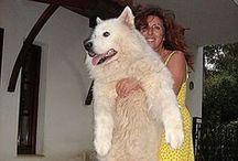 Dogs / Σκυλιά