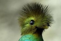 Birds / Πτηνά