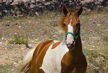 Horses / Άλογα