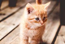 Kitty Lovers!  / Everything kitten & more!