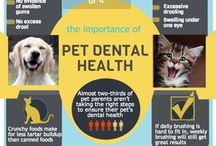 Dental Health Tips  / Great tips and tricks to keeping your pets mouth healthy!