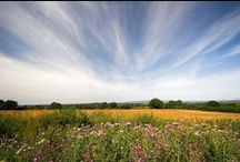 Paddy's Meadow / Inspired by our new scent - a walk in a meadow surrounded by wildflowers and butterflies