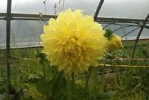 My Flowers / Tutti i fiori del mondo