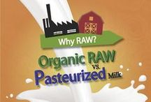 Raw Milk FACTS / OPDC raw whole milk is alive with fully active enzymes, a broad spectrum of naturally occurring beneficial bacteria, all 22 essential amino acids, OMEGA-3 fatty acids, metabolically available vitamins, immunoglobulin's, minerals, antioxidants, and CLA.