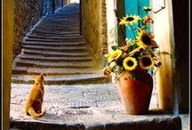 .bella Italia.
