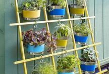 Hortas e Plantas