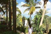 Gardens, Grounds & Greens / The lush, tropical vegetation makes Cocobay a nature lover's haven.