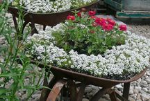 Flowers/Gardening/Landscaping / by Kristie Anderson