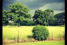Paysages du sud Mayenne / Paysages du sud Mayenne : rivière, nature, campagne et fleurissement.