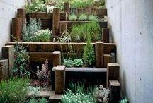 Herbs & Nature