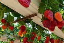 Bær og grønnsakshage