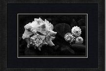Carla Pivonski® Images - Shell Series / A series of seashells, fine art images by photographer, Carla Pivonski.