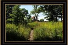 Carla Pivonski® Images - Golden Meadow  / Landscape images by photographer, Carla Pivonski.