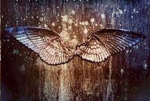 Angelfall Covers