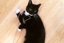 Oscar the Crochet Cat