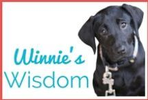 ** Winnie's Wisdom ** / Winnie is the newest member of Team EatTrainWin. She began her role as our Chief Canine Officer on August 1st. Winnie  shares her wisdom and pulls in some lessons from her predecessors' Sota and Schooner who RIP.