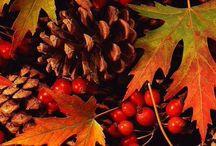 I ♡ Autumn