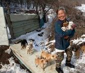 This South Korean Woman Has Saved 200 Dogs And Cares For All Of Them