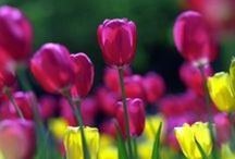 I LOVE SPRING / Please pin only images relating directly to Spring!