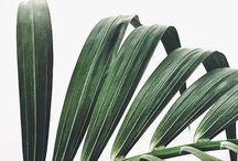 green / Tutze.nl - green - groen - botanics - nature - natuur - planten - plants