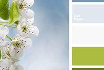 Clean Design / Elegant Design