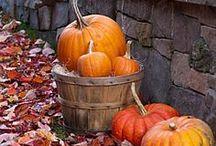 Autumn/Pumpkins / by Sonja's Strubbelkopp