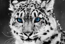 Animali / Animali di tutti i tipi dai più simpatici ai più buffi