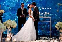 My Weddding - Mijn Bruiloft!!