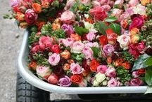 flowers & plants / Sth can make you fresh and enjoy