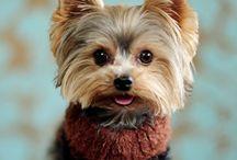 Cute animals / We love animals