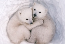 Cute and Magnificent Animals / by Allie W