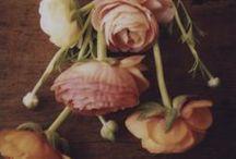 Botanical / plantkes en blommekes / by Loes De Wijngaert
