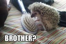 Critters / Adorable animals