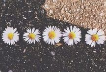 f l o w e r s / Pictures of all kind of flowers.