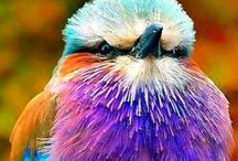 pretty birds / Beautiful birds that I think are amazing